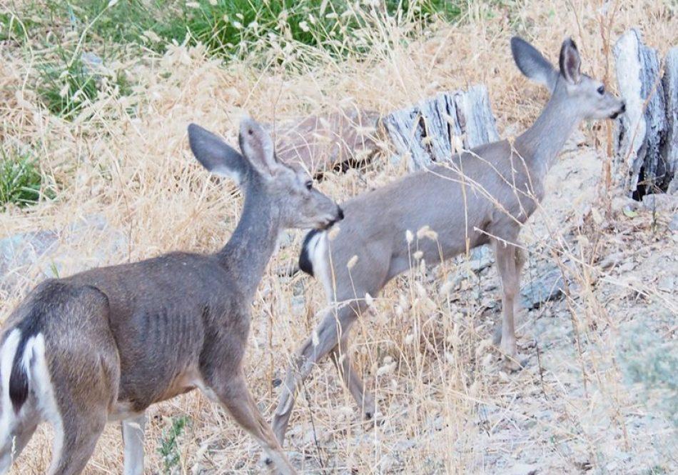 deer_apartment