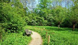 grassfield_path