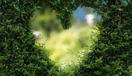 heart_bush